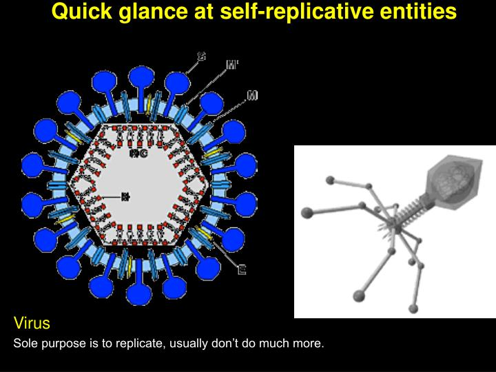 Quick glance at self-replicative entities