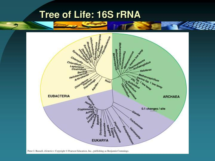 Tree of Life: 16S rRNA