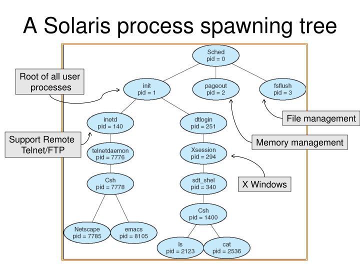 A Solaris process spawning tree