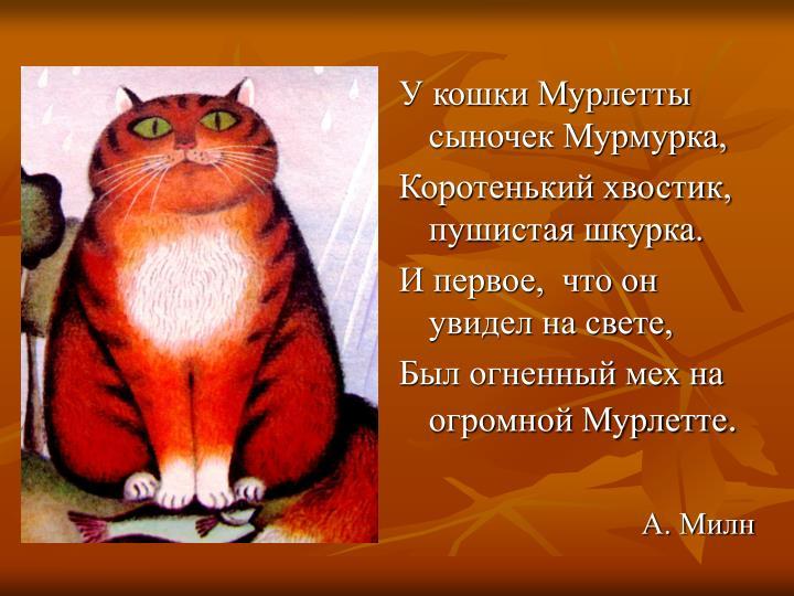 У кошки Мурлетты сыночек Мурмурка,