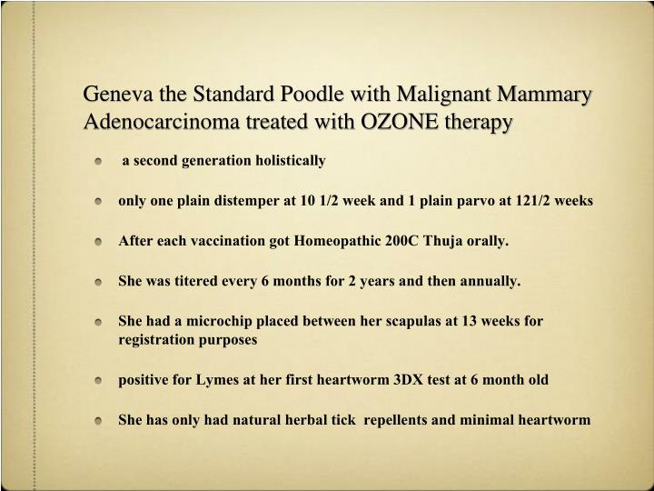 Geneva the Standard Poodle with Malignant Mammary Adenocarcinoma treated with OZONE therapy