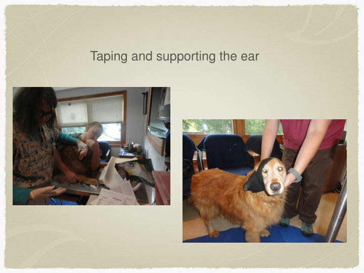 Taping and supporting the ear