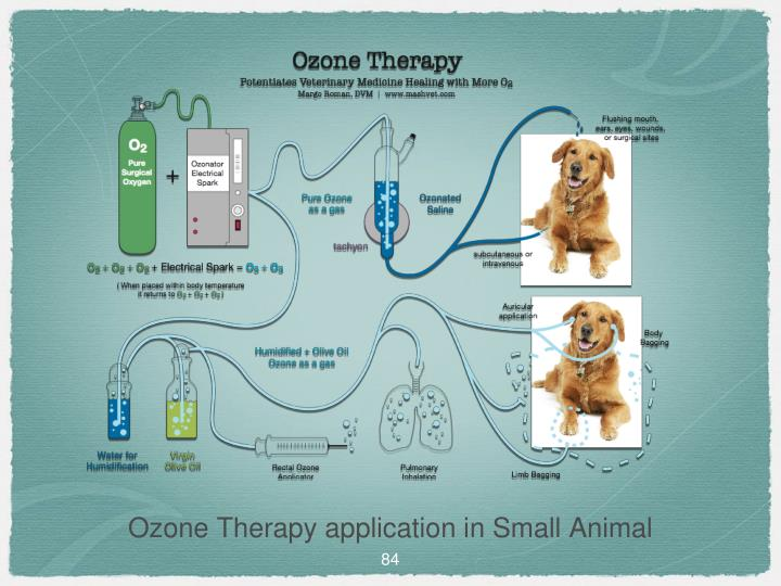 Ozone Therapy application in Small Animal