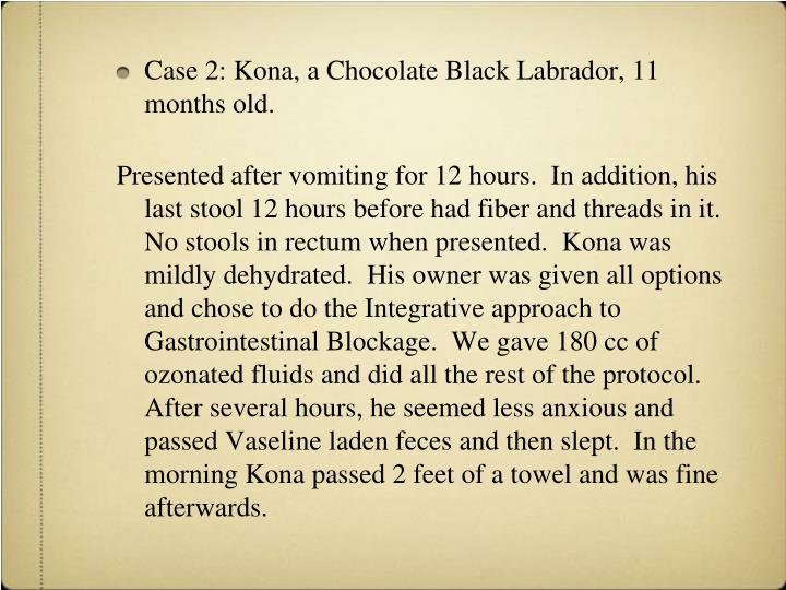 Case 2: Kona, a Chocolate Black Labrador, 11 months old.