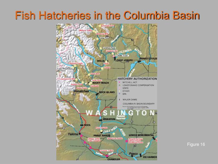 Fish Hatcheries in the Columbia Basin