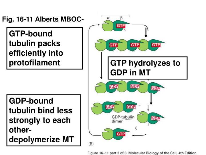 Fig. 16-11 Alberts MBOC-