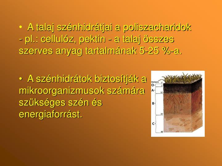 A talaj szénhidrátjai a poliszacharidok