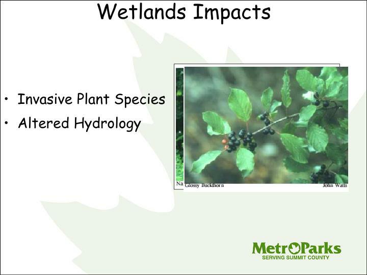 Wetlands Impacts