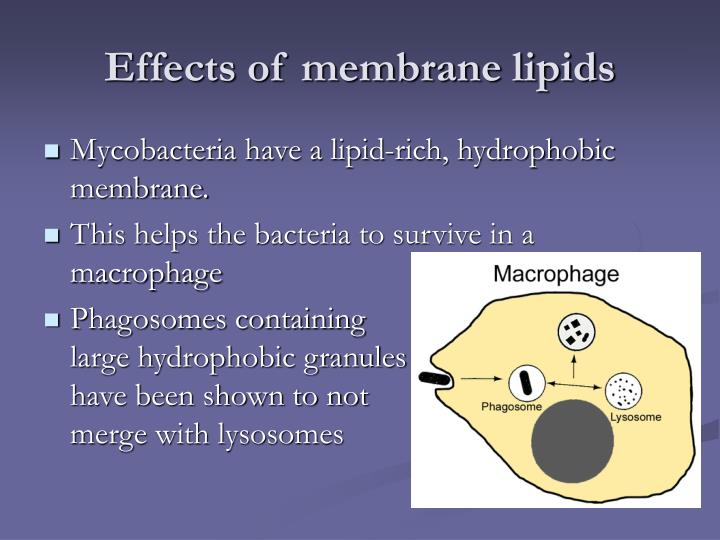 Effects of membrane lipids