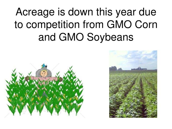 Acreage is down this year due to competition from GMO Corn and GMO Soybeans