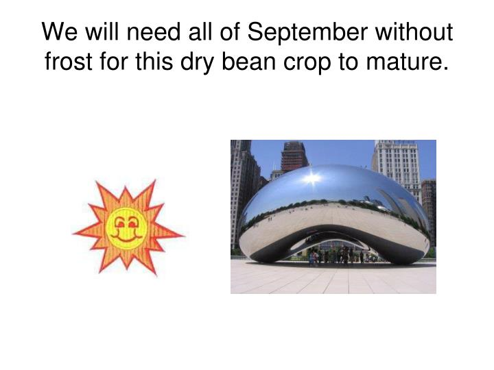 We will need all of September without frost for this dry bean crop to mature.
