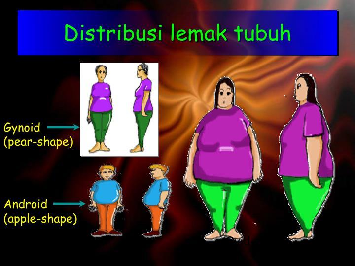 Distribusi lemak tubuh