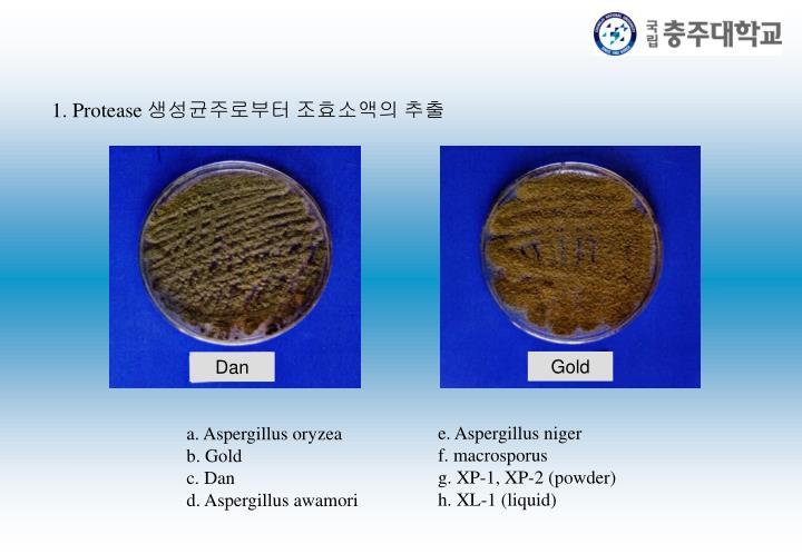 e. Aspergillus niger
