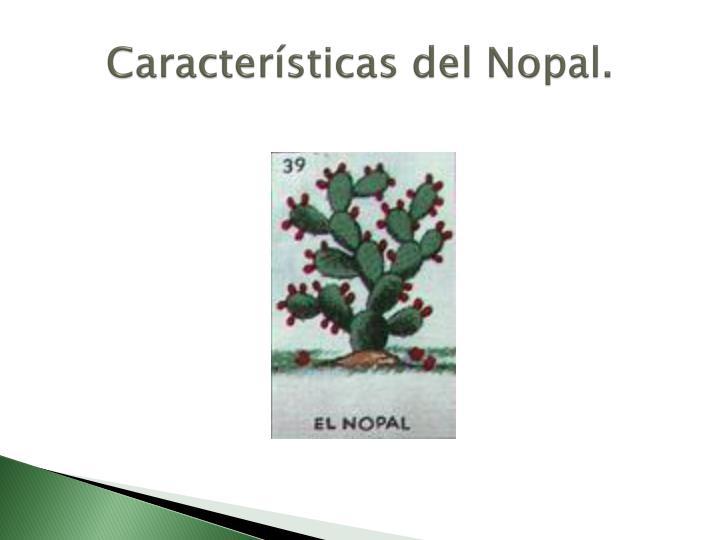 Características del Nopal