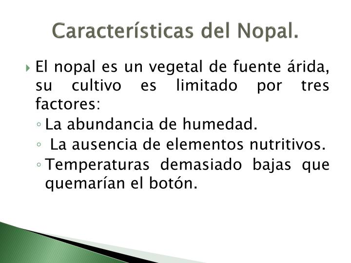 Características del Nopal.
