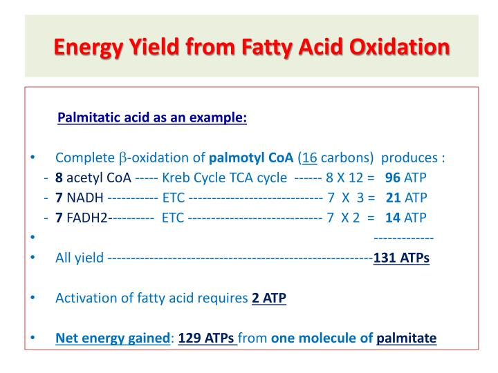 Energy Yield from Fatty