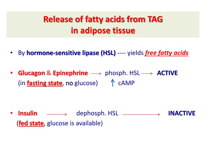 Release of fatty acids from TAG