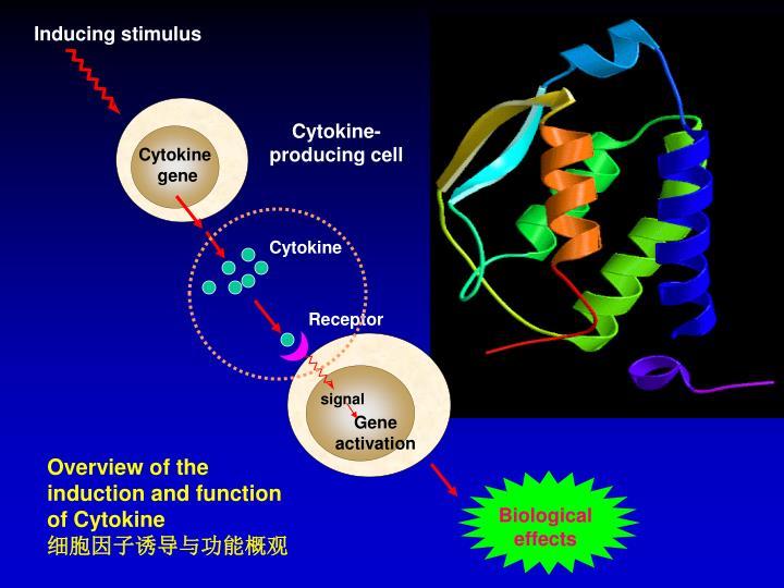 Cytokine-producing cell