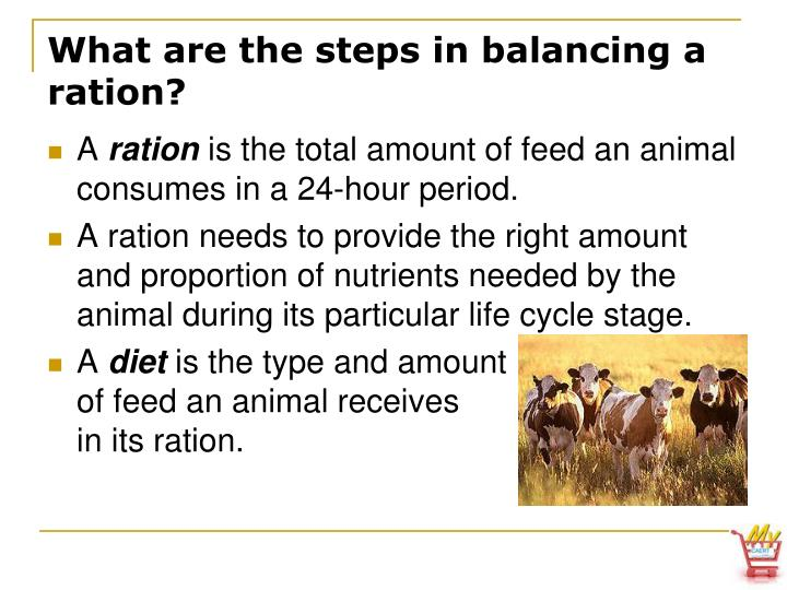 What are the steps in balancing a ration