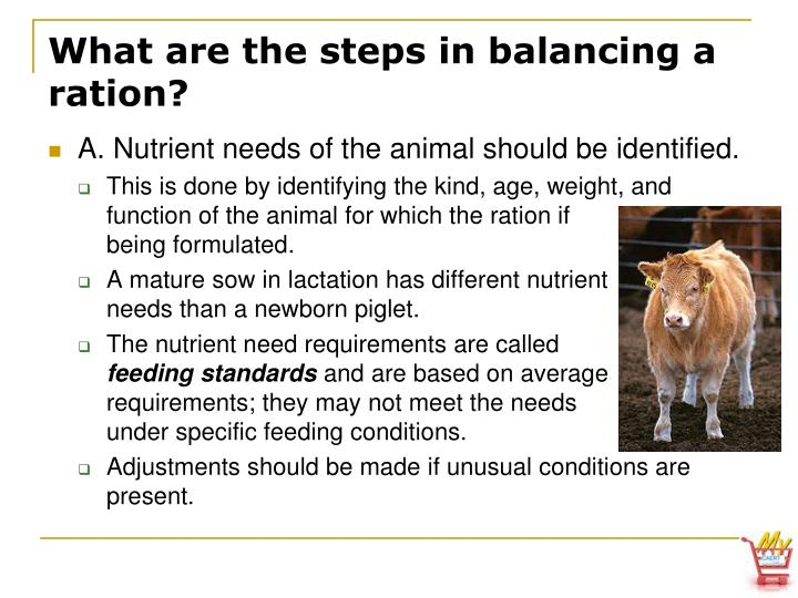 What are the steps in balancing a ration?