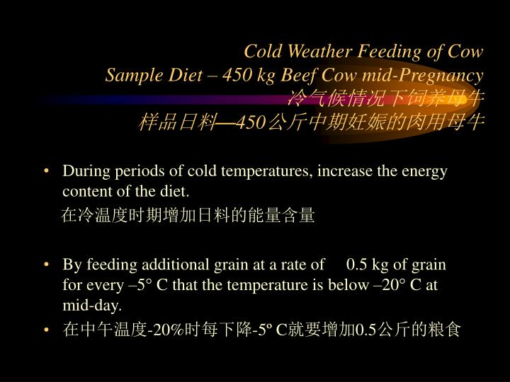 Cold Weather Feeding of Cow
