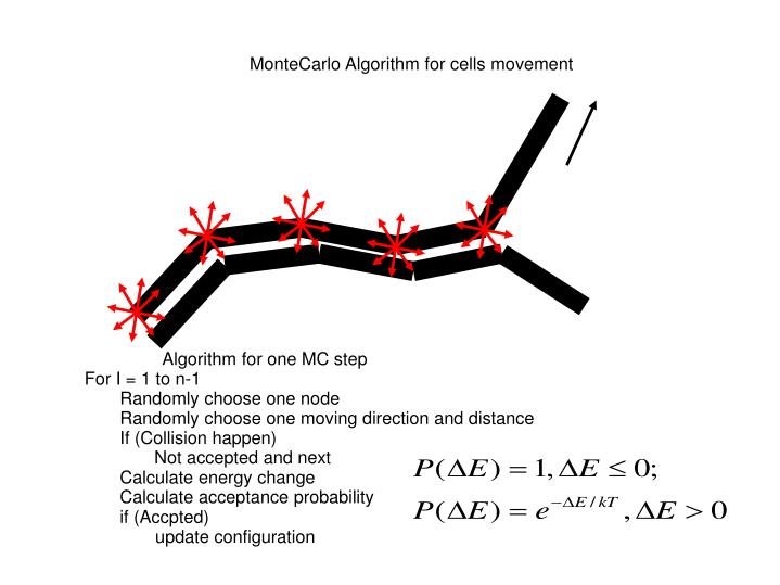 MonteCarlo Algorithm for cells movement