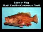 spanish flag north carolina continental shelf