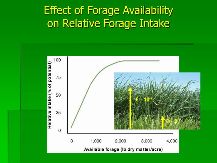 Effect of Forage Availability