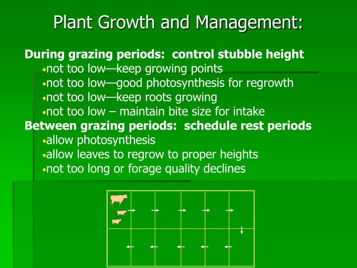 Plant Growth and Management: