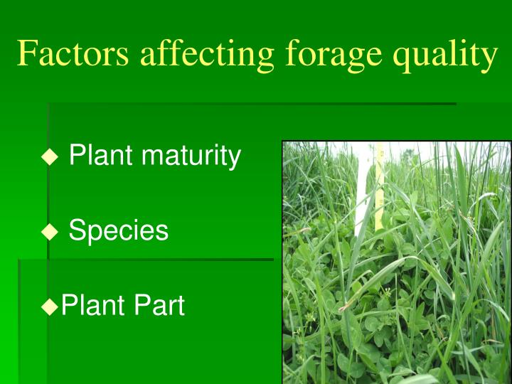 Factors affecting forage quality