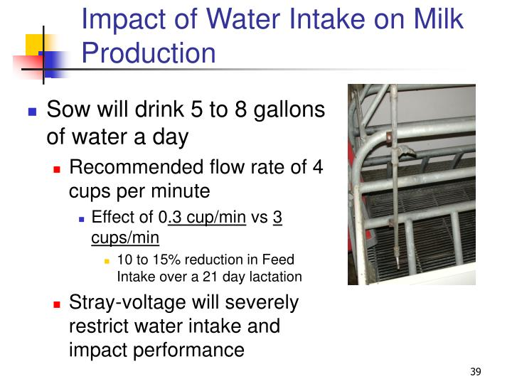 Impact of Water Intake on Milk Production