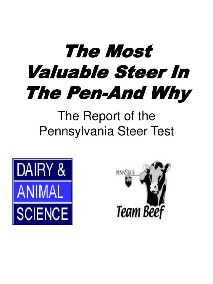 The most valuable steer in the pen and why