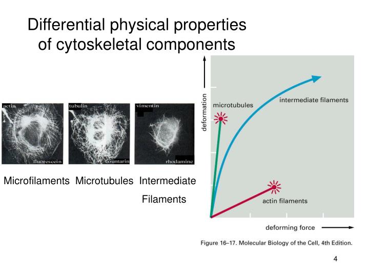 Differential physical properties