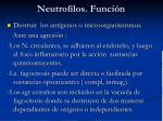 neutrofilos funci n