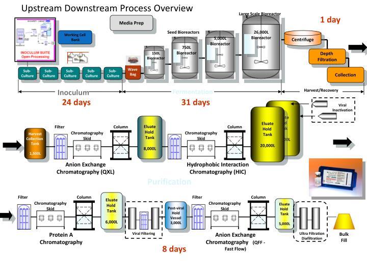 Upstream Downstream Process Overview