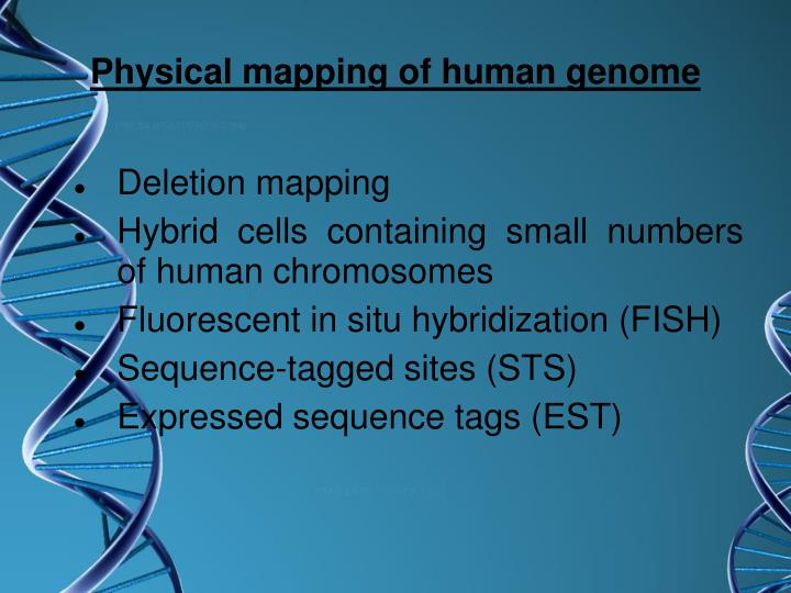 Physical mapping of human genome