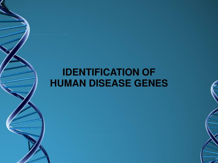 IDENTIFICATION OF HUMAN DISEASE GENES