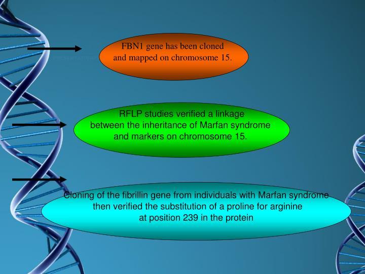 FBN1 gene has been cloned