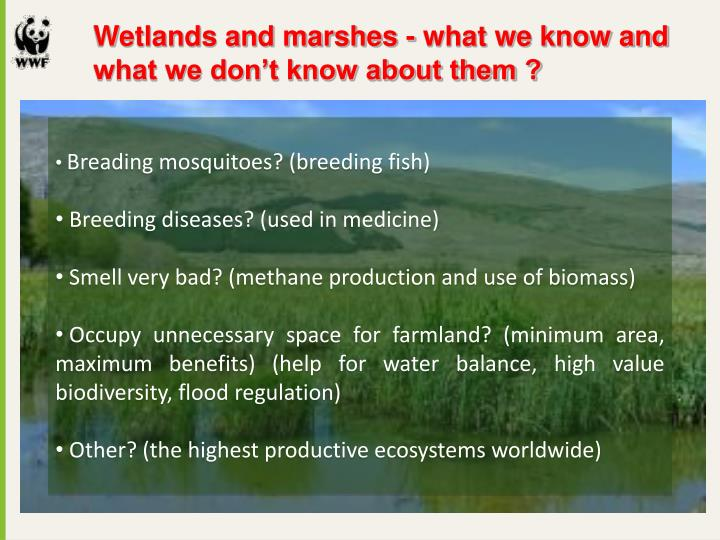 Wetlands and marshes - what we know and 		what we don't know about them ?