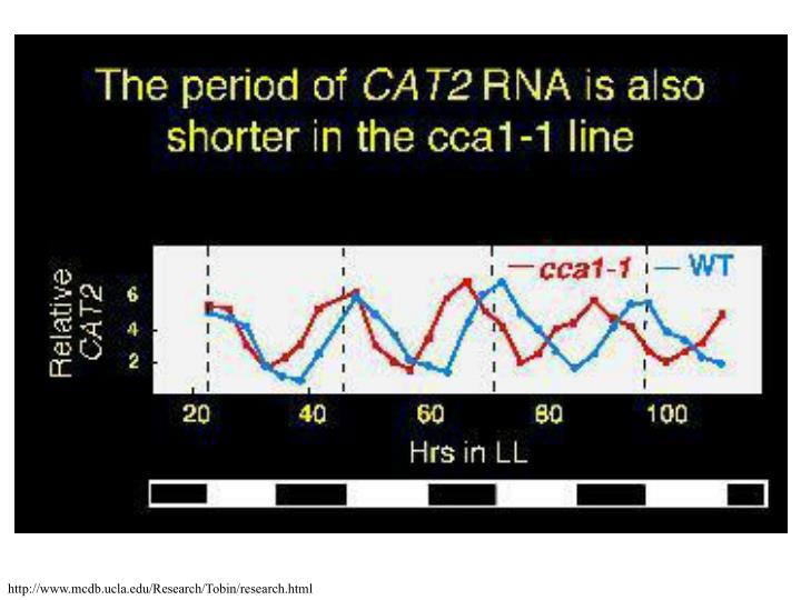 http://www.mcdb.ucla.edu/Research/Tobin/research.html