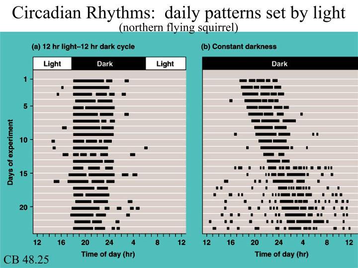 Circadian Rhythms:  daily patterns set by light