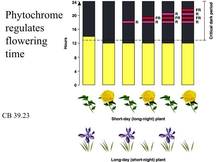 Phytochrome regulates flowering time