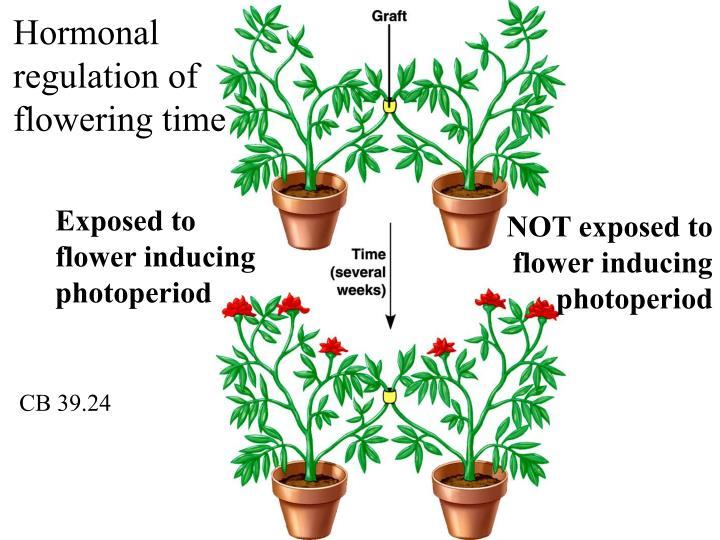 Hormonal regulation of flowering time
