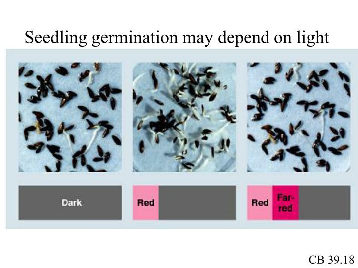 Seedling germination may depend on light