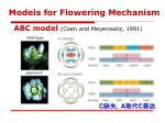 models for flowering mechanism1