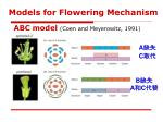 models for flowering mechanism2