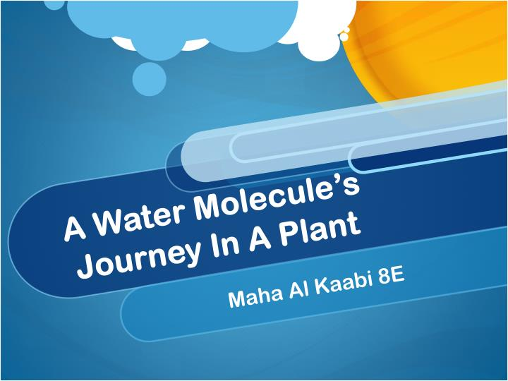 A water molecule s journey in a plant