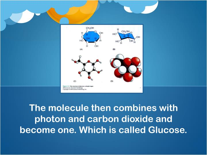 The molecule then combines with photon and carbon dioxide and become one. Which is called Glucose.
