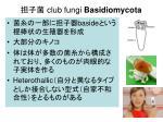 club fungi basidiomycota