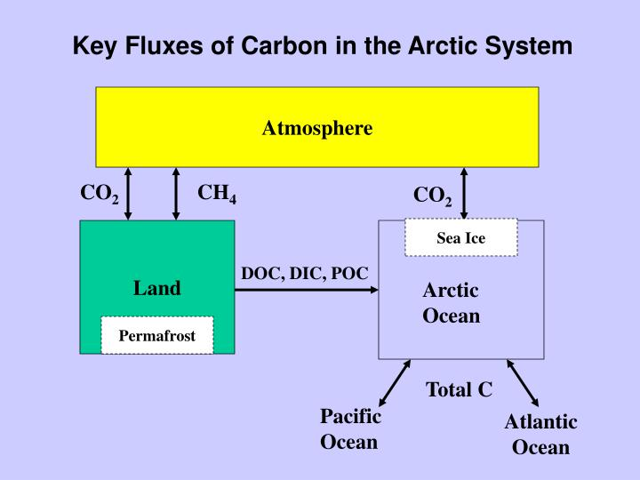 Key Fluxes of Carbon in the Arctic System